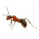 ant-img